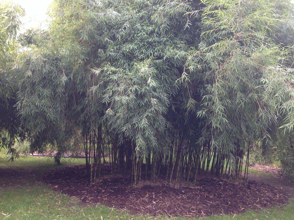 Londyn - Kew Gardens
